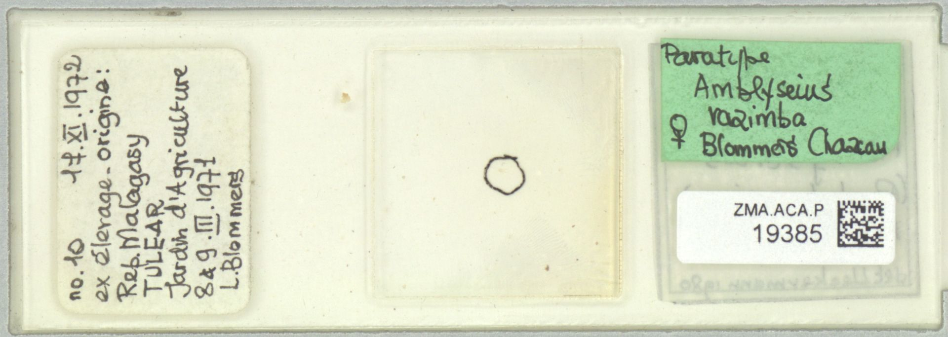 ZMA.ACA.P.19385   Amblyseius razimba Blommers & Chazeau