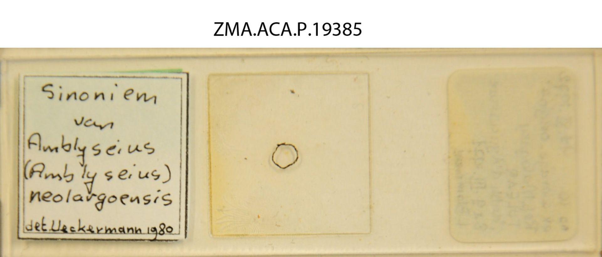 ZMA.ACA.P.19385 | Amblyseius razimba Blommers & Chazeau