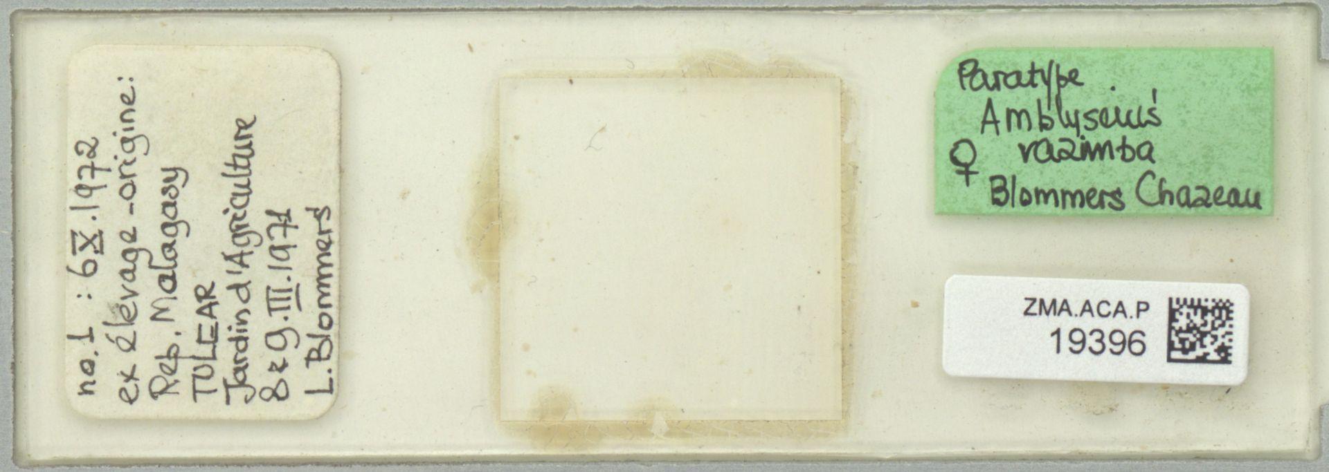 ZMA.ACA.P.19396 | Amblyseius razimba Blommers & Chazeau