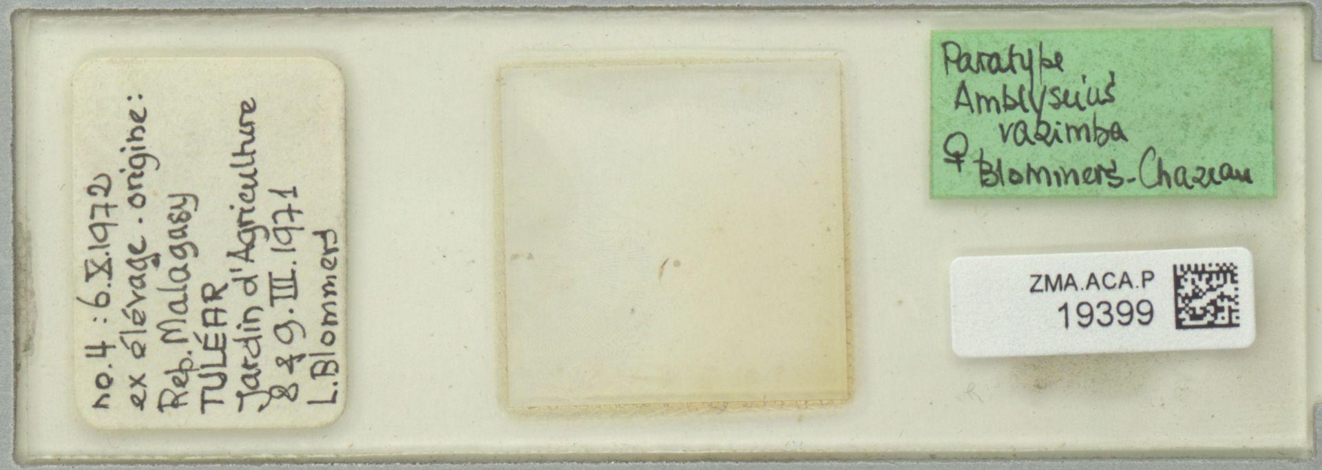 ZMA.ACA.P.19399 | Amblyseius razimba Blommers & Chazeau