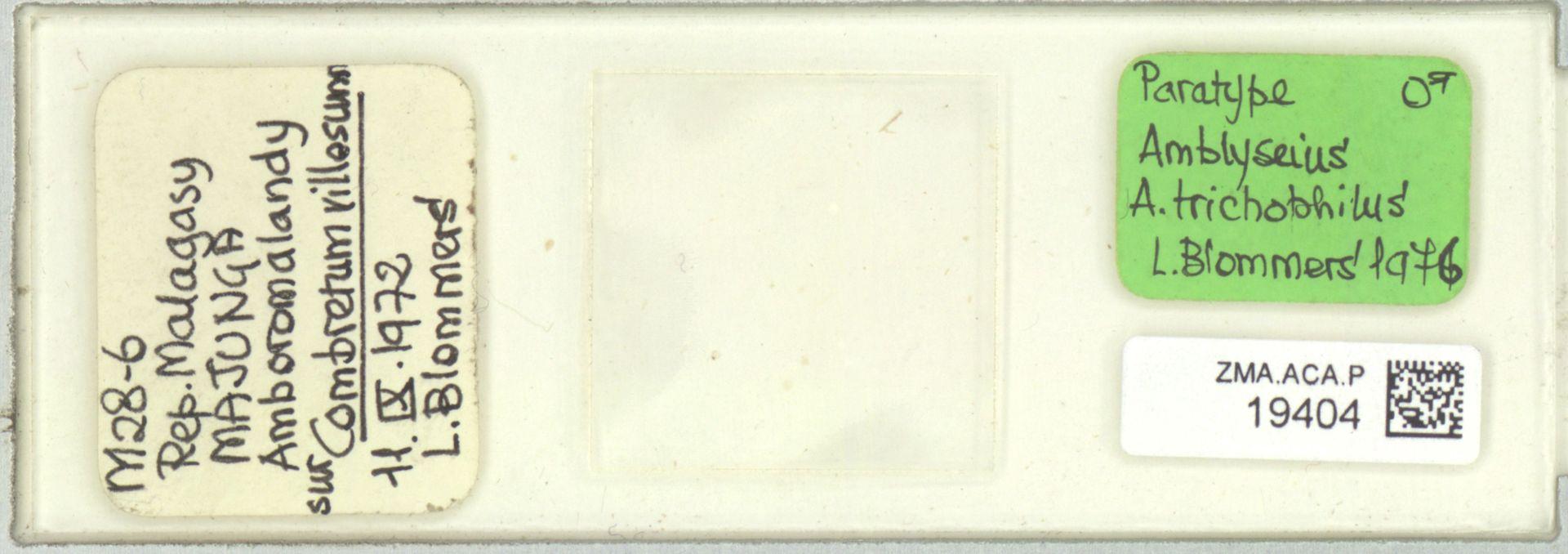 ZMA.ACA.P.19404 | Amblyseius (Amblyseius) trichophilus Blommers, 1976