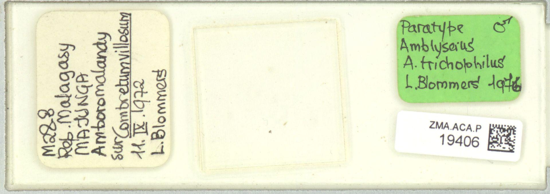 ZMA.ACA.P.19406 | Amblyseius (Amblyseius) trichophilus Blommers, 1976