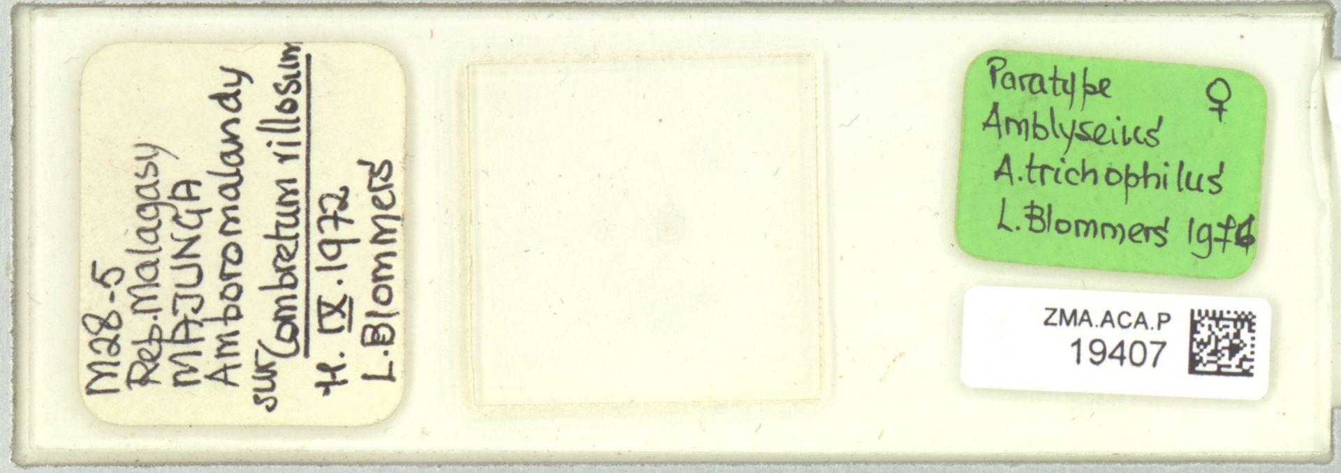 ZMA.ACA.P.19407 | Amblyseius (Amblyseius) trichophilus Blommers, 1976