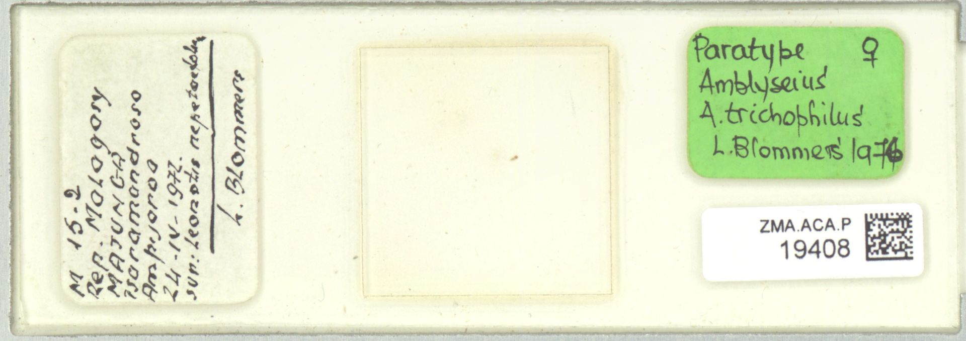ZMA.ACA.P.19408 | Amblyseius (Amblyseius) trichophilus Blommers, 1976