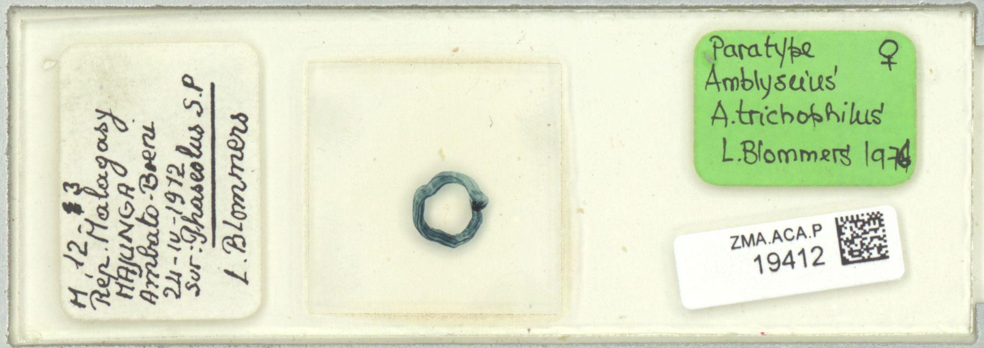 ZMA.ACA.P.19412   Amblyseius (Amblyseius) trichophilus Blommers, 1976