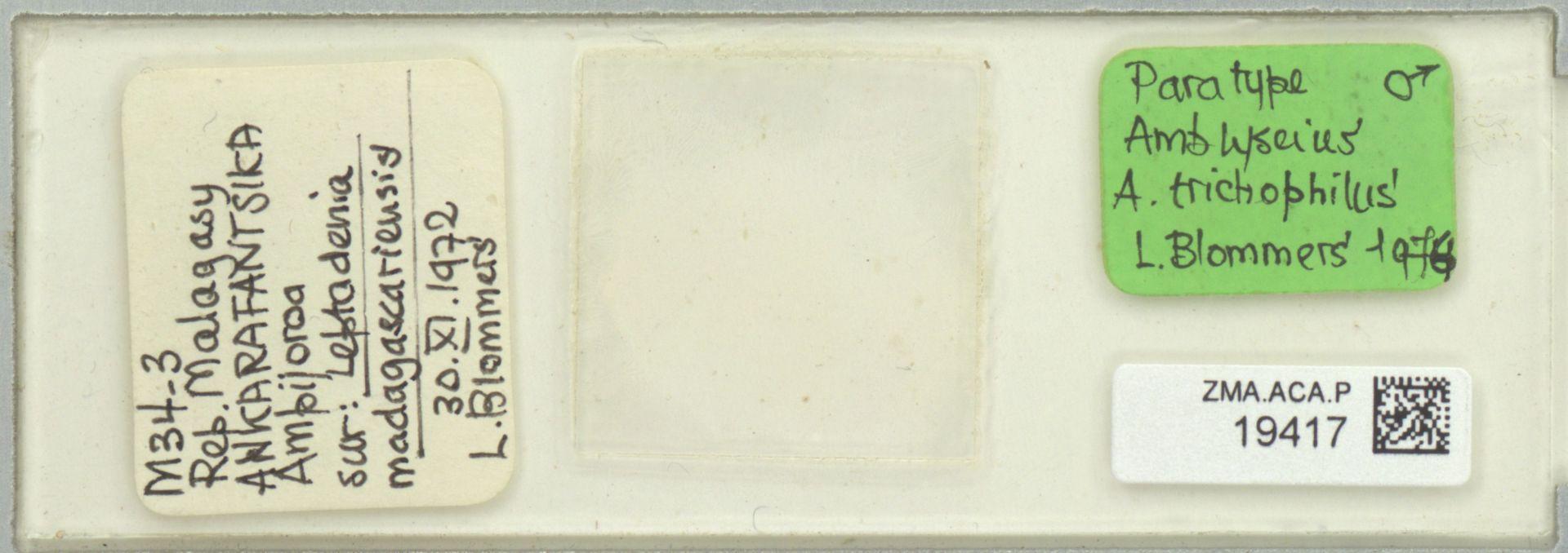 ZMA.ACA.P.19417 | Amblyseius (Amblyseius) trichophilus Blommers, 1976