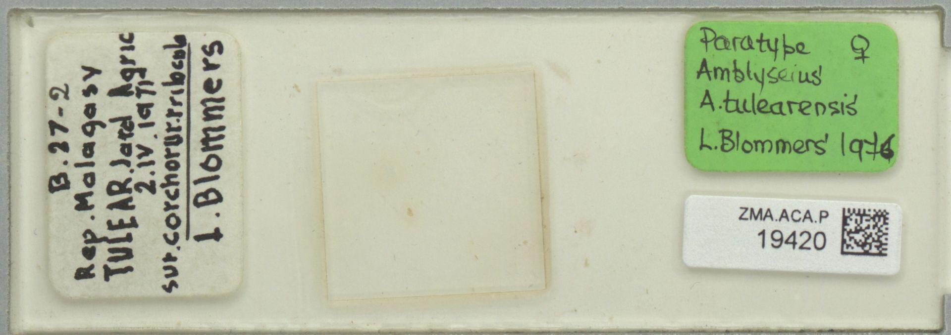 ZMA.ACA.P.19420 | Amblyseius (Amblyseius) tulearensis Blommers, 1976