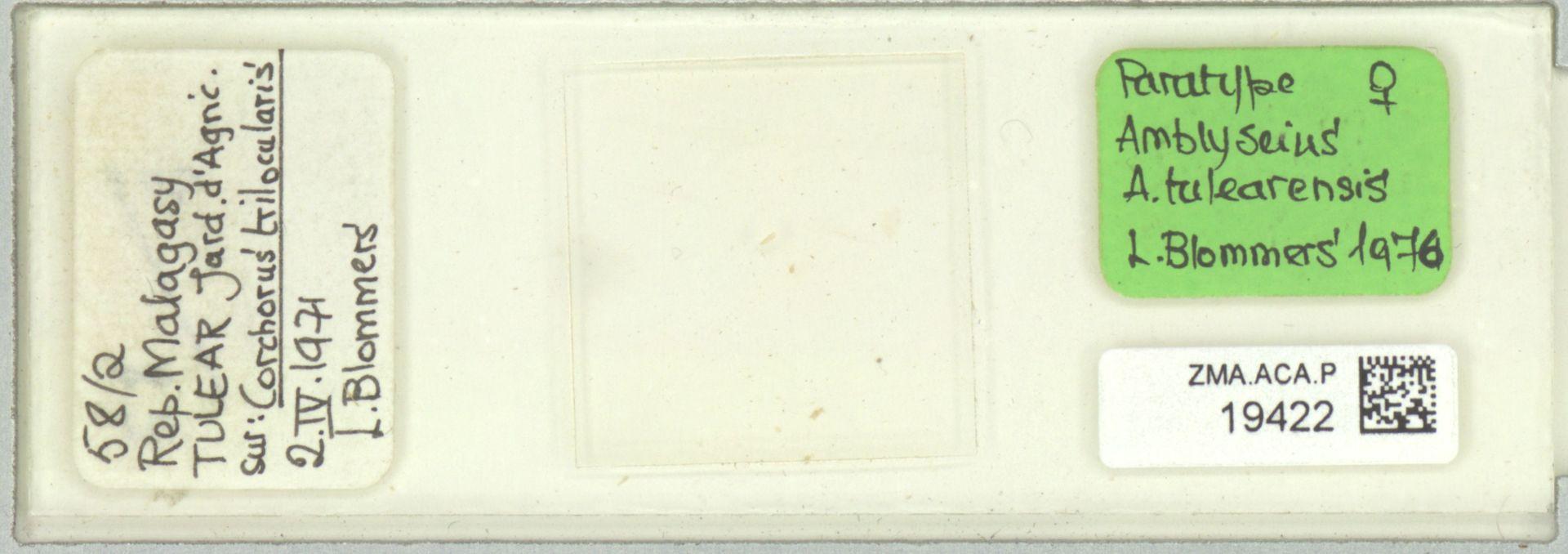 ZMA.ACA.P.19422   Amblyseius (Amblyseius) tulearensis Blommers, 1976