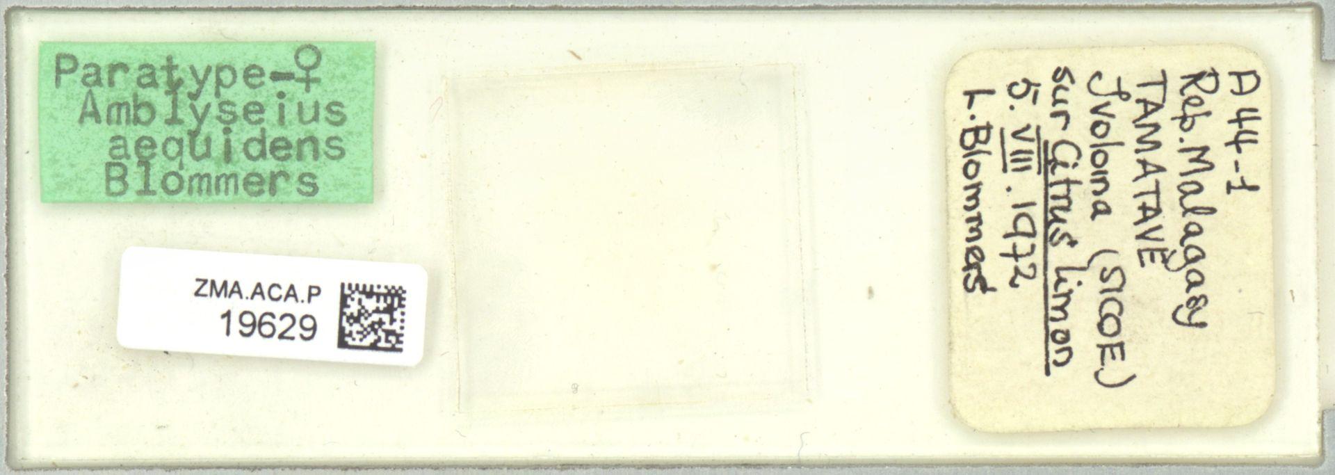 ZMA.ACA.P.19629 | Amblyseius aequidens Blommers