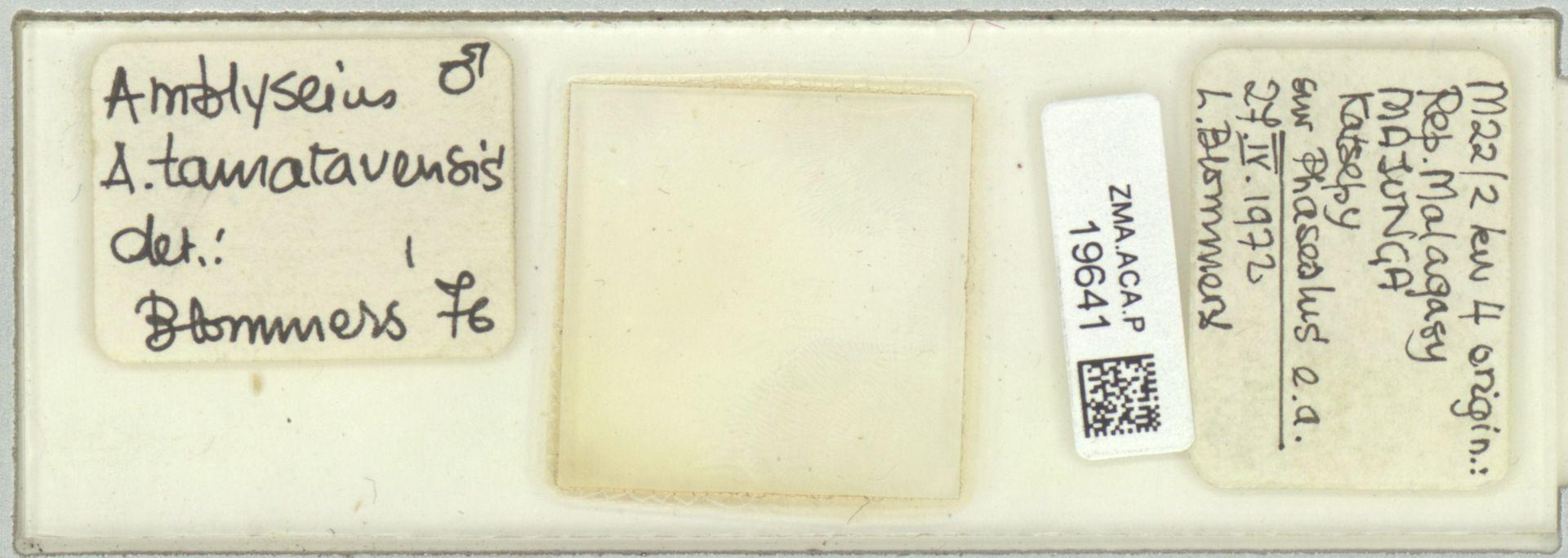 ZMA.ACA.P.19641 | Amblyseius (Amblyseius) tamatavensis Blommers