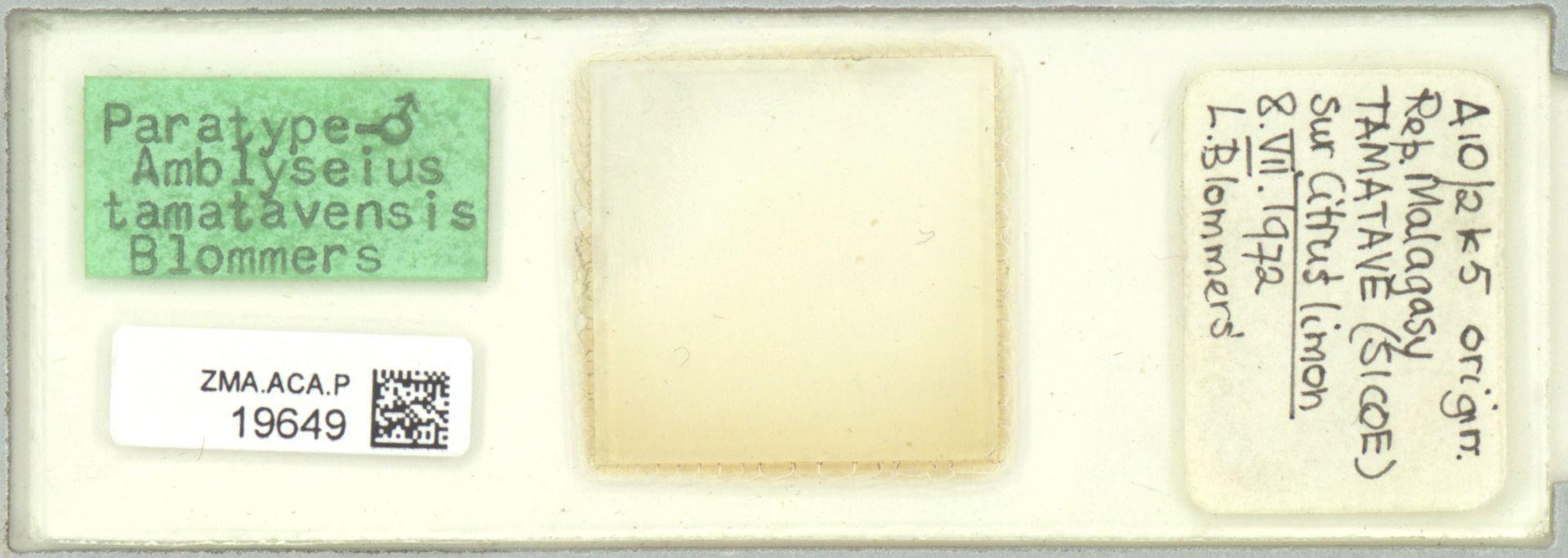 ZMA.ACA.P.19649 | Amblyseius (Amblyseius) tamatavensis Blommers