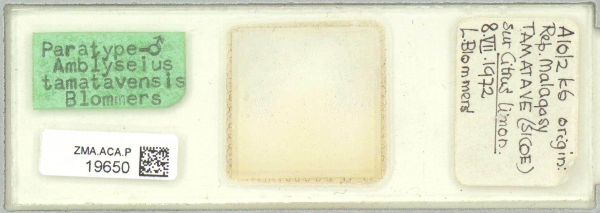 ZMA.ACA.P.19650   Amblyseius (Amblyseius) tamatavensis Blommers