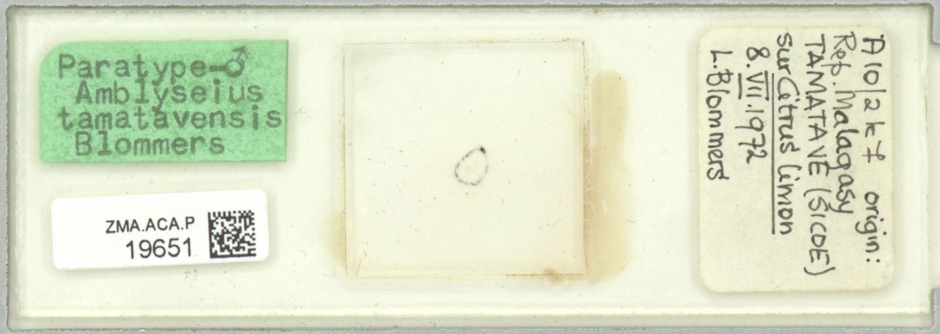 ZMA.ACA.P.19651 | Amblyseius (Amblyseius) tamatavensis Blommers