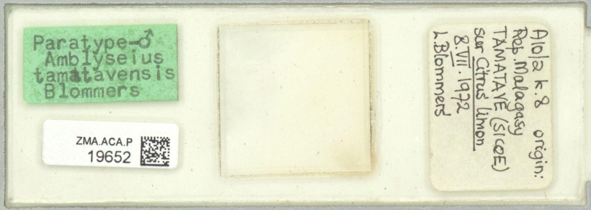 ZMA.ACA.P.19652 | Amblyseius (Amblyseius) tamatavensis Blommers
