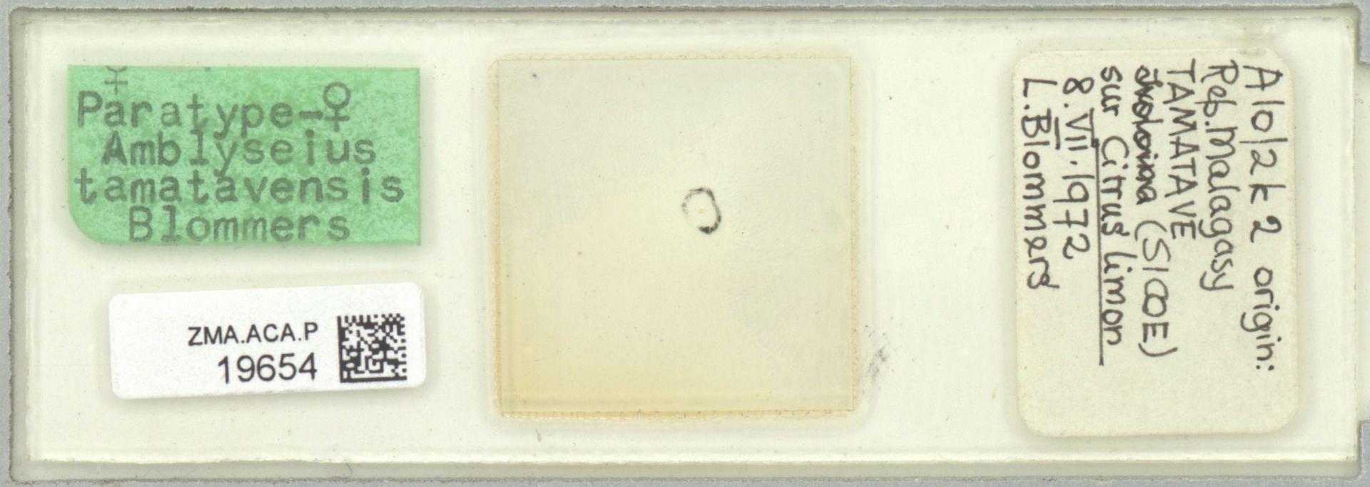 ZMA.ACA.P.19654 | Amblyseius (Amblyseius) tamatavensis Blommers