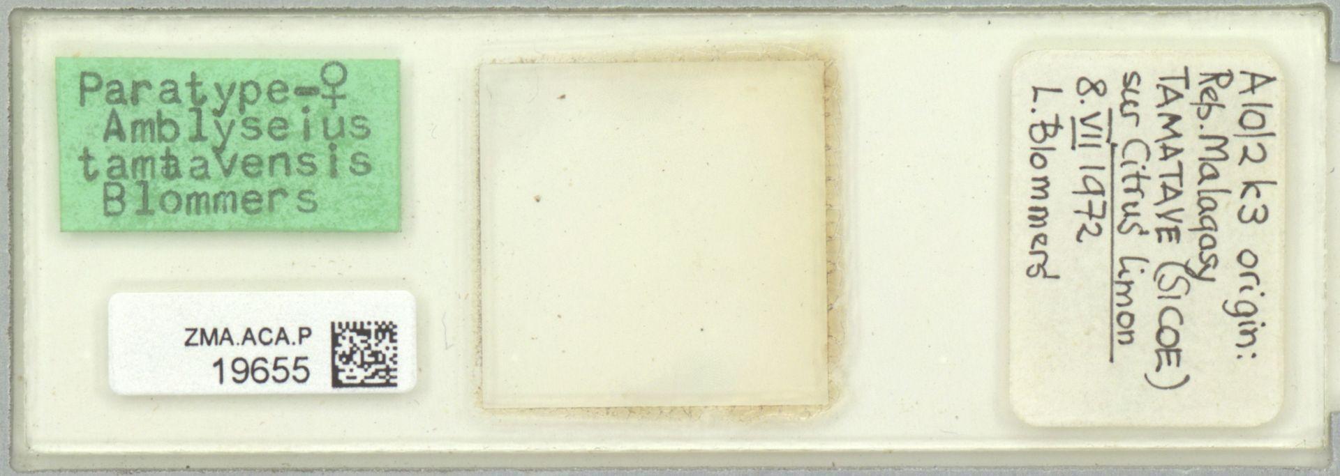 ZMA.ACA.P.19655 | Amblyseius (Amblyseius) tamatavensis Blommers