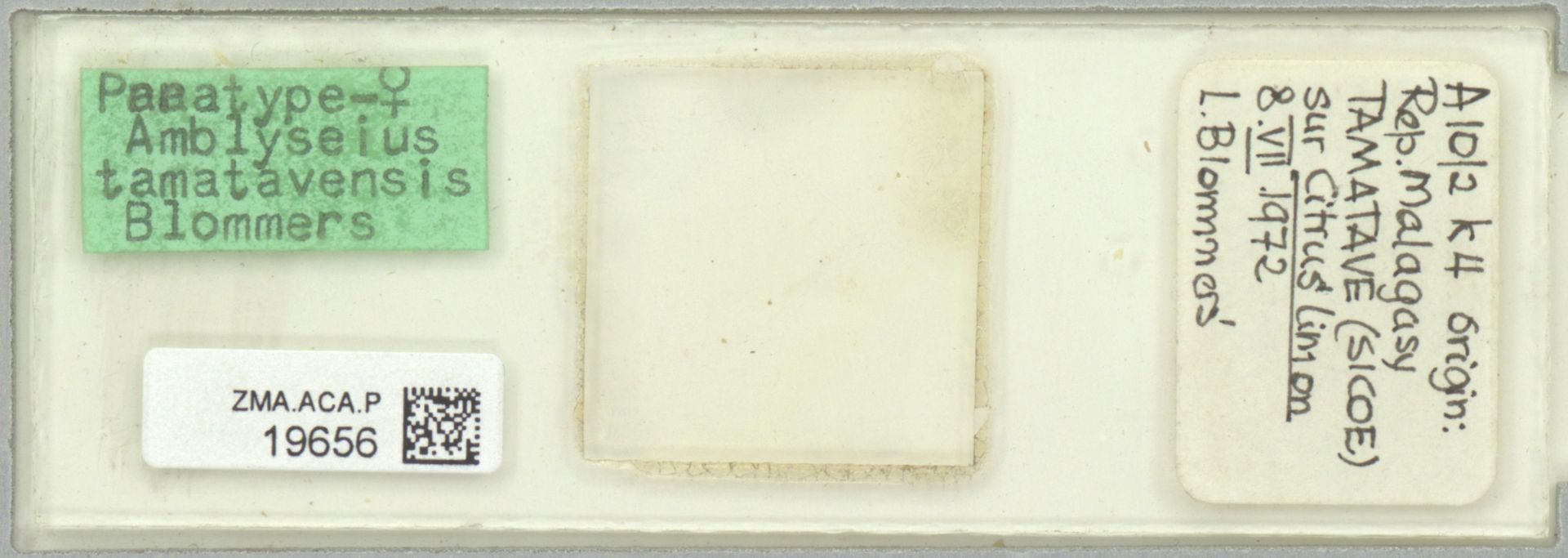 ZMA.ACA.P.19656 | Amblyseius (Amblyseius) tamatavensis Blommers