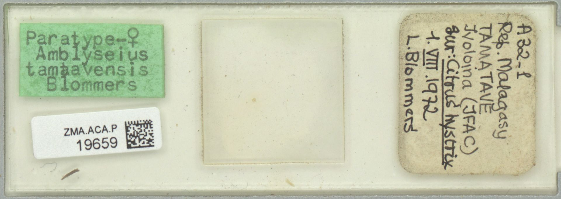 ZMA.ACA.P.19659   Amblyseius (Amblyseius) tamatavensis Blommers