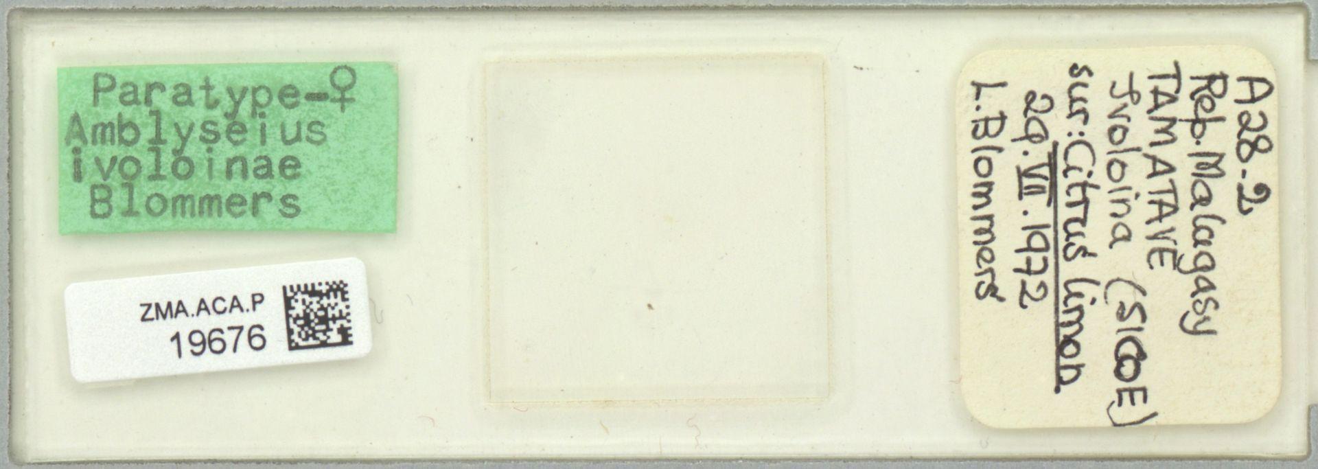 ZMA.ACA.P.19676 | Amblyseius ivoloinae Blommers