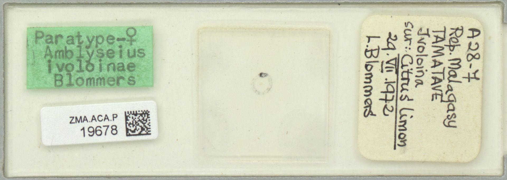 ZMA.ACA.P.19678 | Amblyseius ivoloinae Blommers