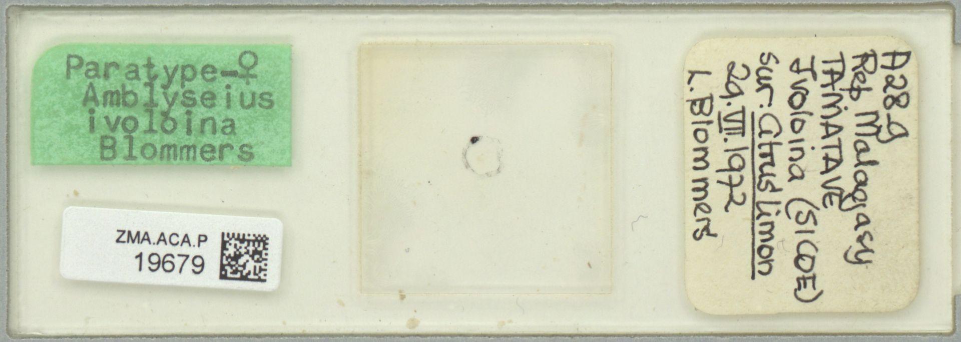 ZMA.ACA.P.19679   Amblyseius ivoloinae Blommers