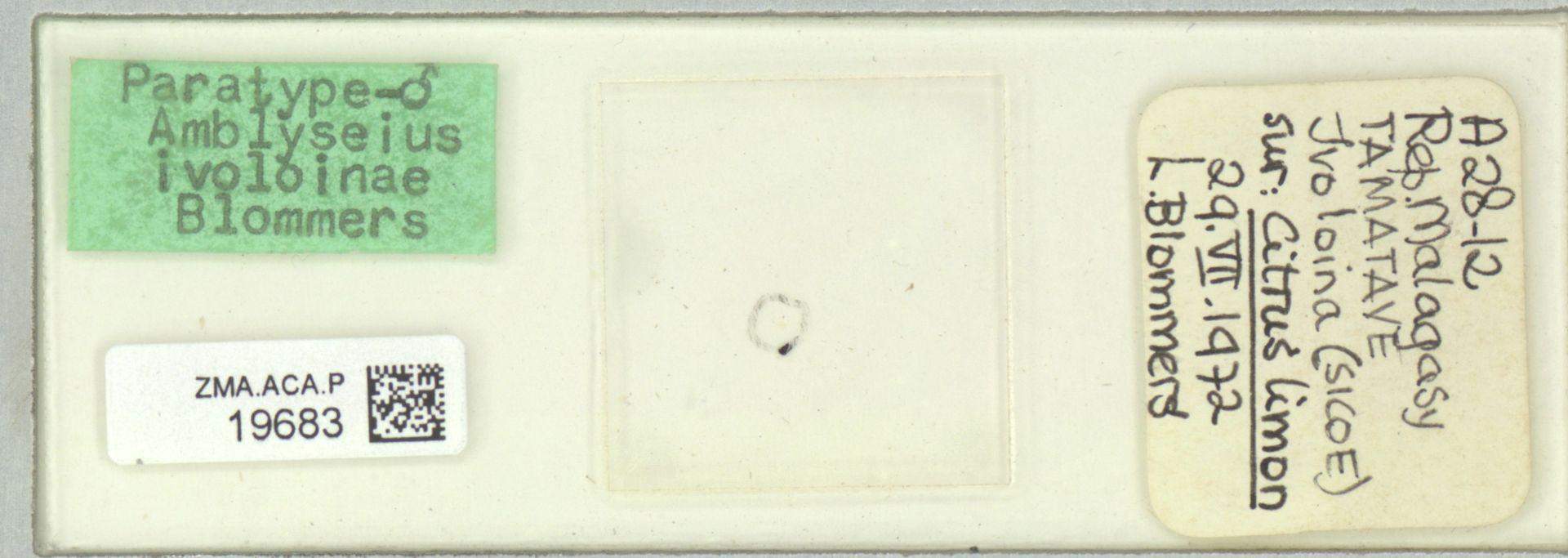ZMA.ACA.P.19683 | Amblyseius ivoloinae Blommers