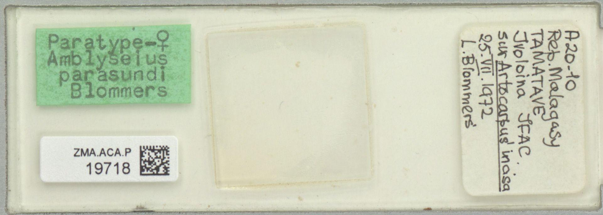 ZMA.ACA.P.19718 | Amblyseius parasundi