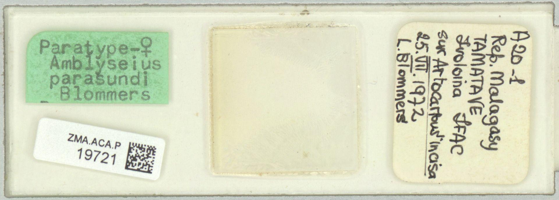 ZMA.ACA.P.19721   Amblyseius parasundi