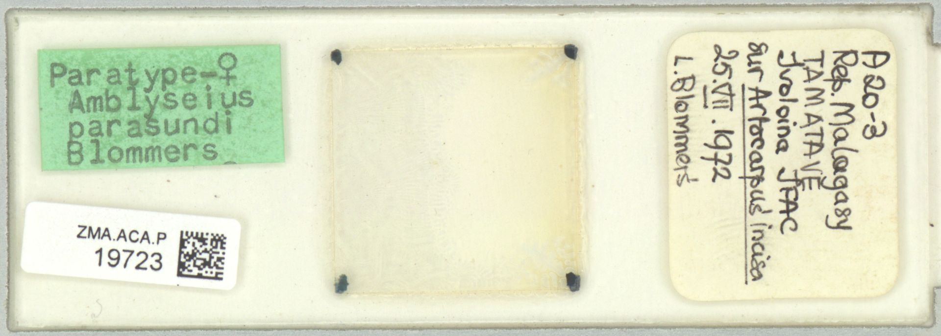 ZMA.ACA.P.19723 | Amblyseius parasundi