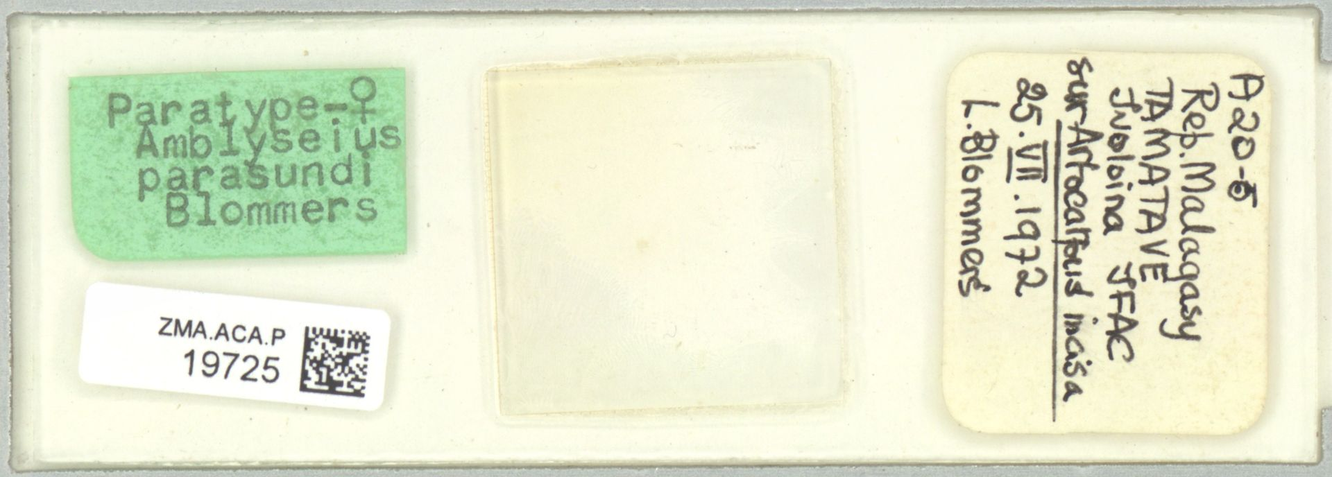 ZMA.ACA.P.19725 | Amblyseius parasundi