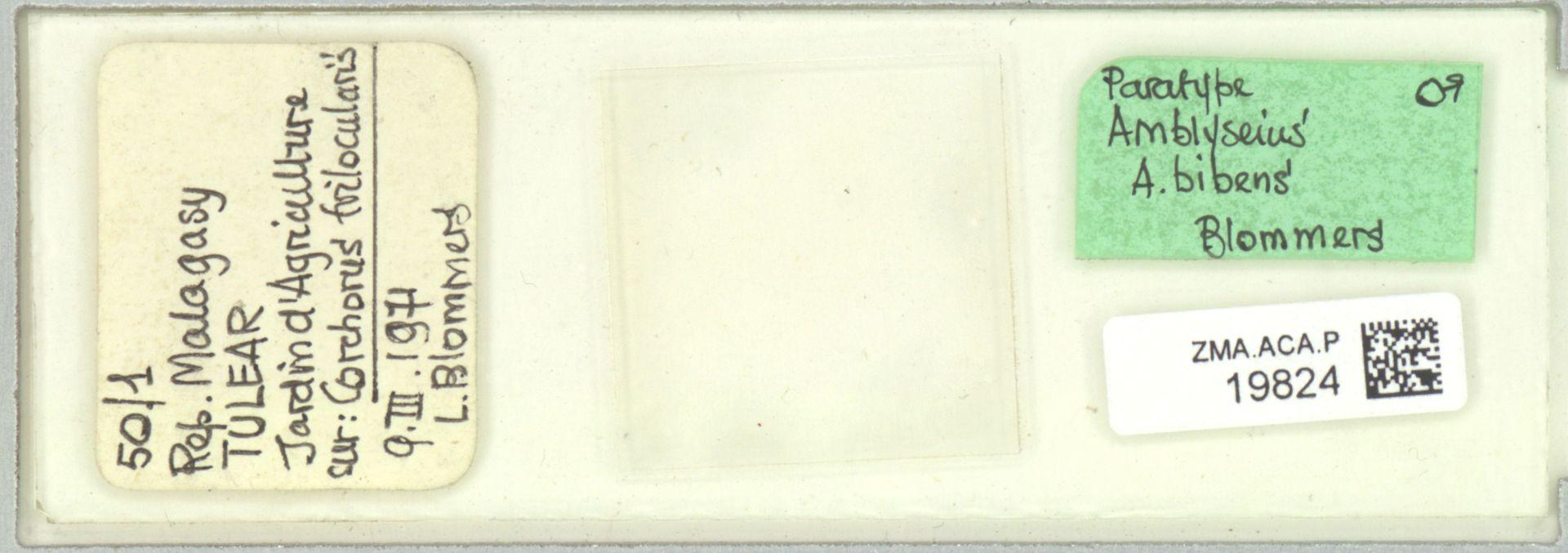 ZMA.ACA.P.19824 | Amblyseius (Amblyseius) bibens Blommers & Chazeau