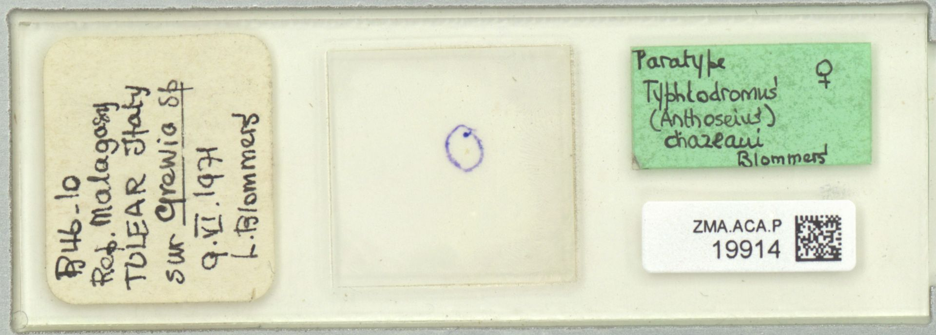 ZMA.ACA.P.19914 | Typhlodromus (Anthoseius) chazeaui