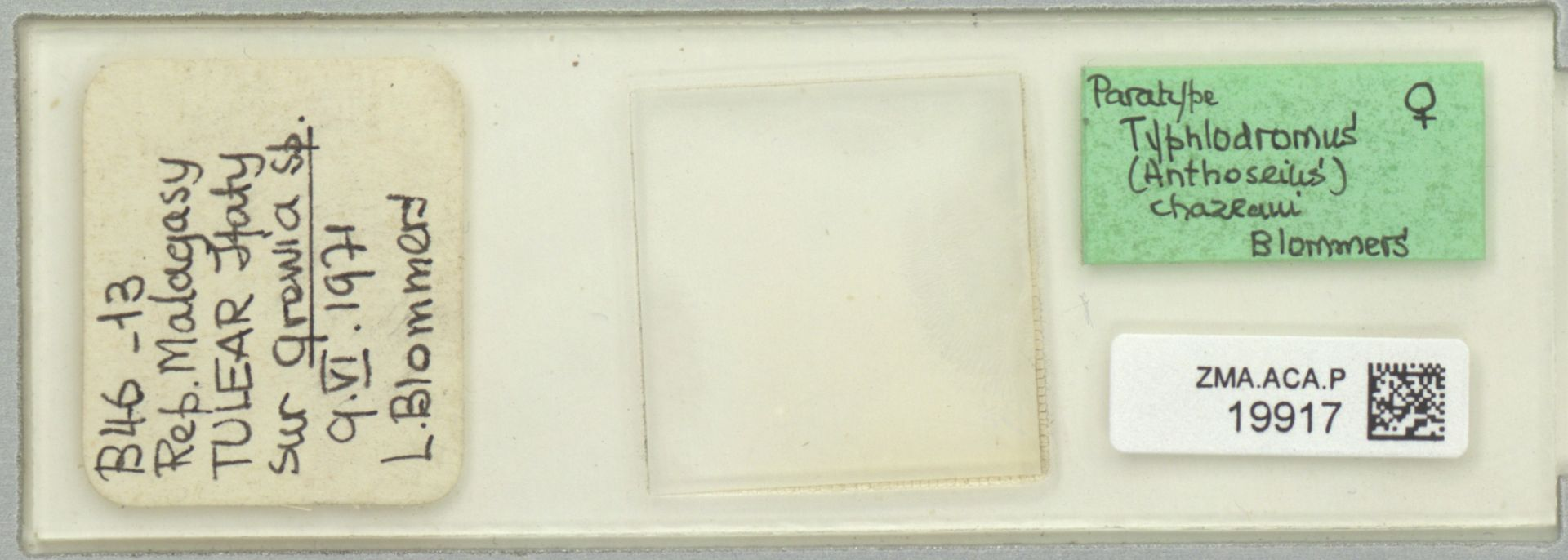 ZMA.ACA.P.19917 | Typhlodromus (Anthoseius) chazeaui