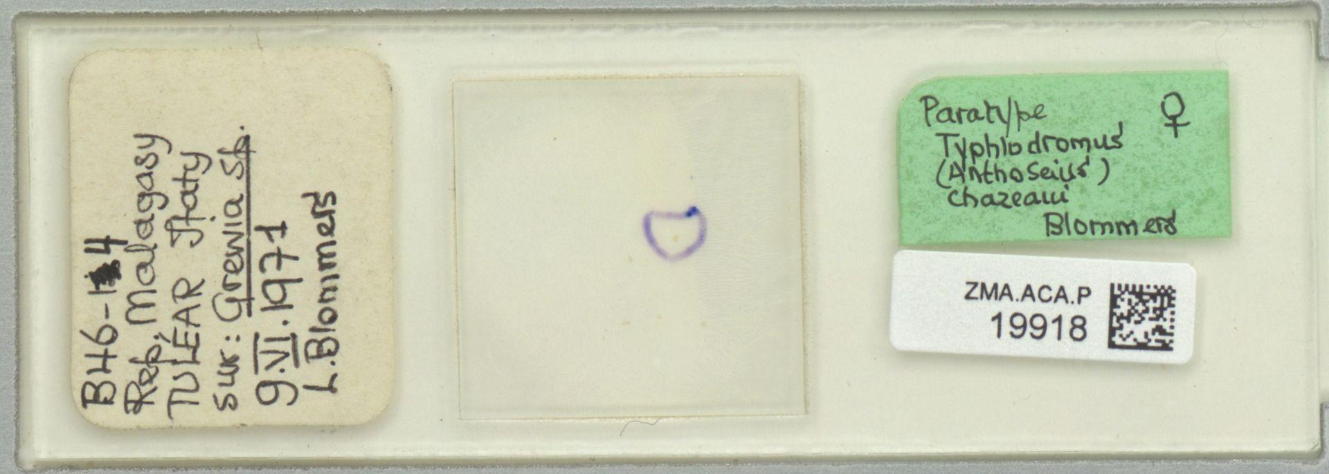 ZMA.ACA.P.19918 | Typhlodromus (Anthoseius) chazeaui