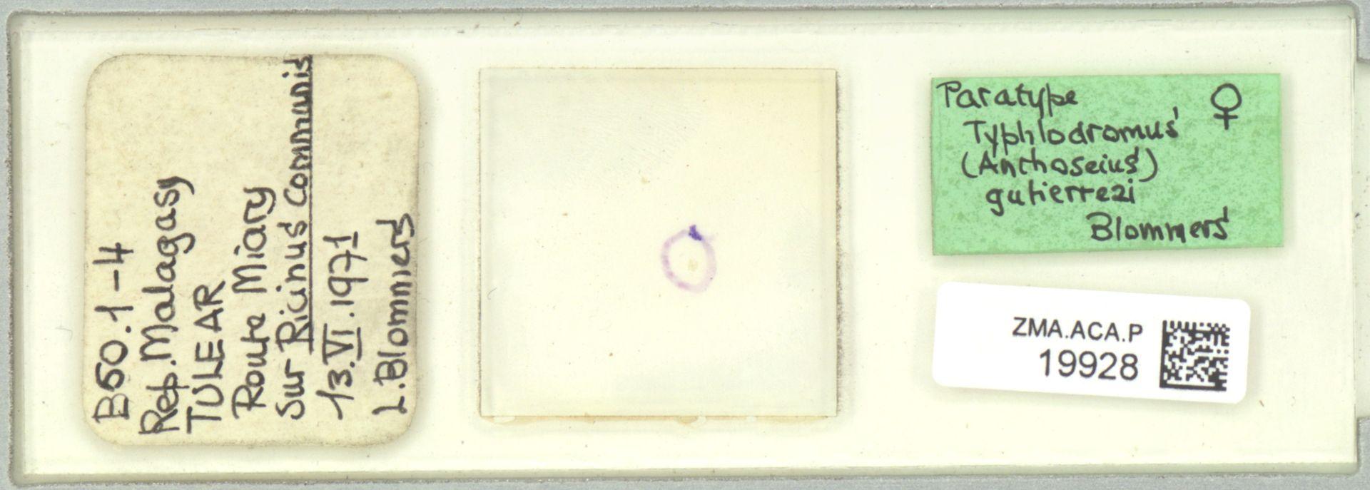 ZMA.ACA.P.19928 | Typhlodromus (Anthoseius) gutierrezi Blommers, 1973