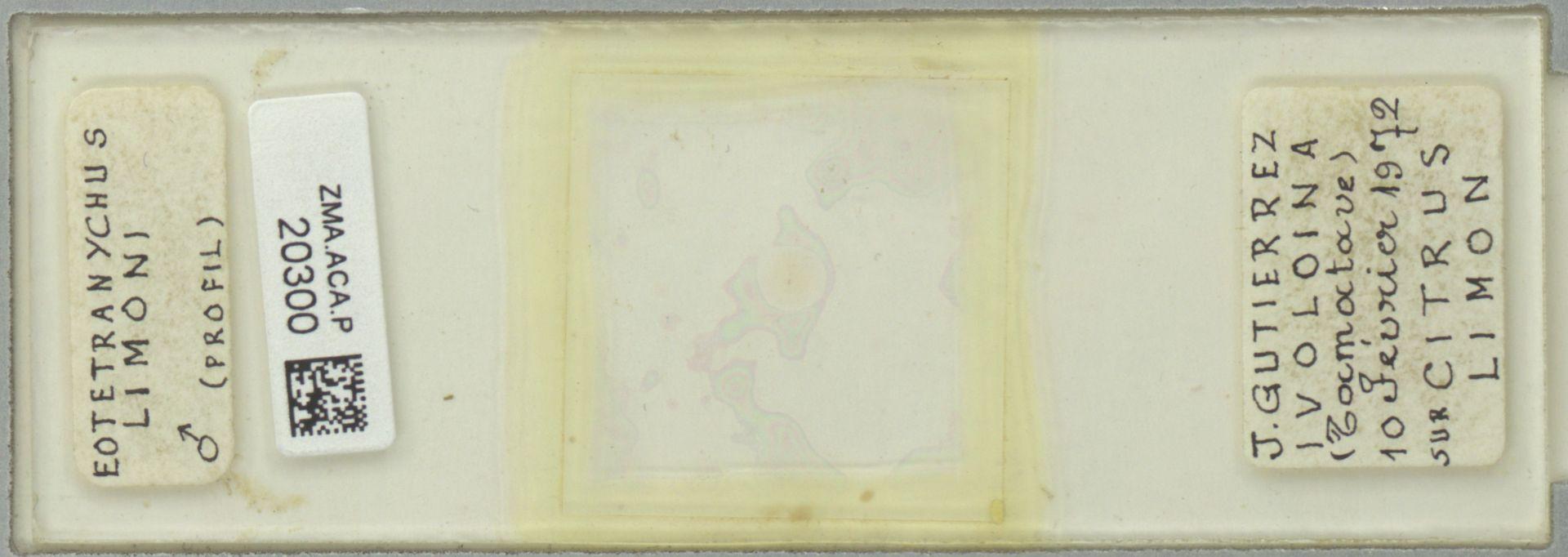 ZMA.ACA.P.20300 | Eotetranychus limoni