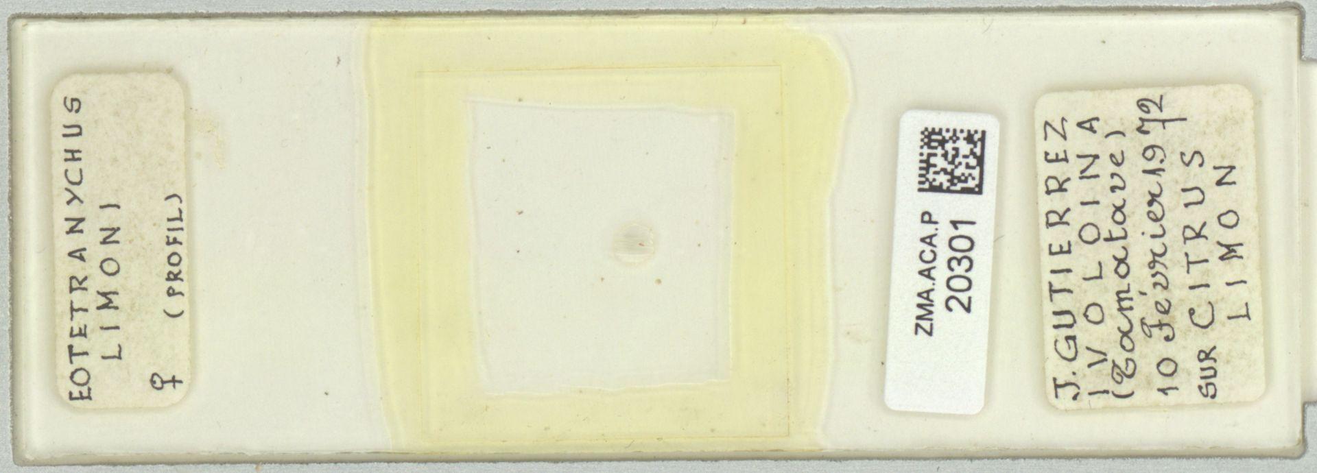 ZMA.ACA.P.20301 | Eotetranychus limoni