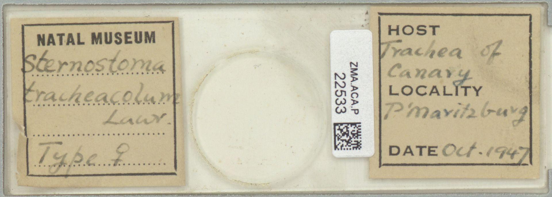 ZMA.ACA.P.22533 | Sternostoma tracheacolum