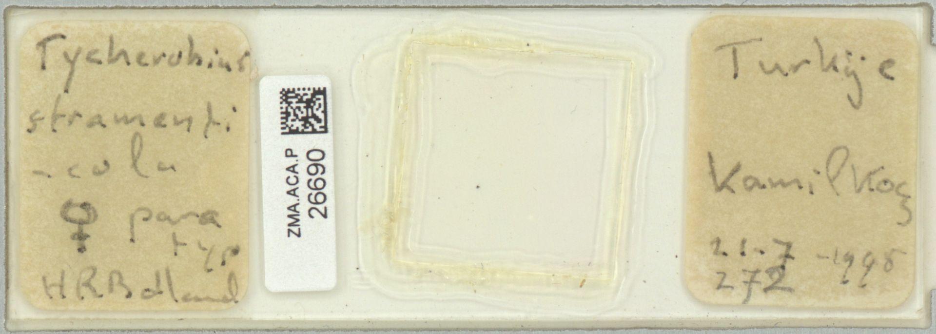 ZMA.ACA.P.26690 | Tycherobius stramenticola