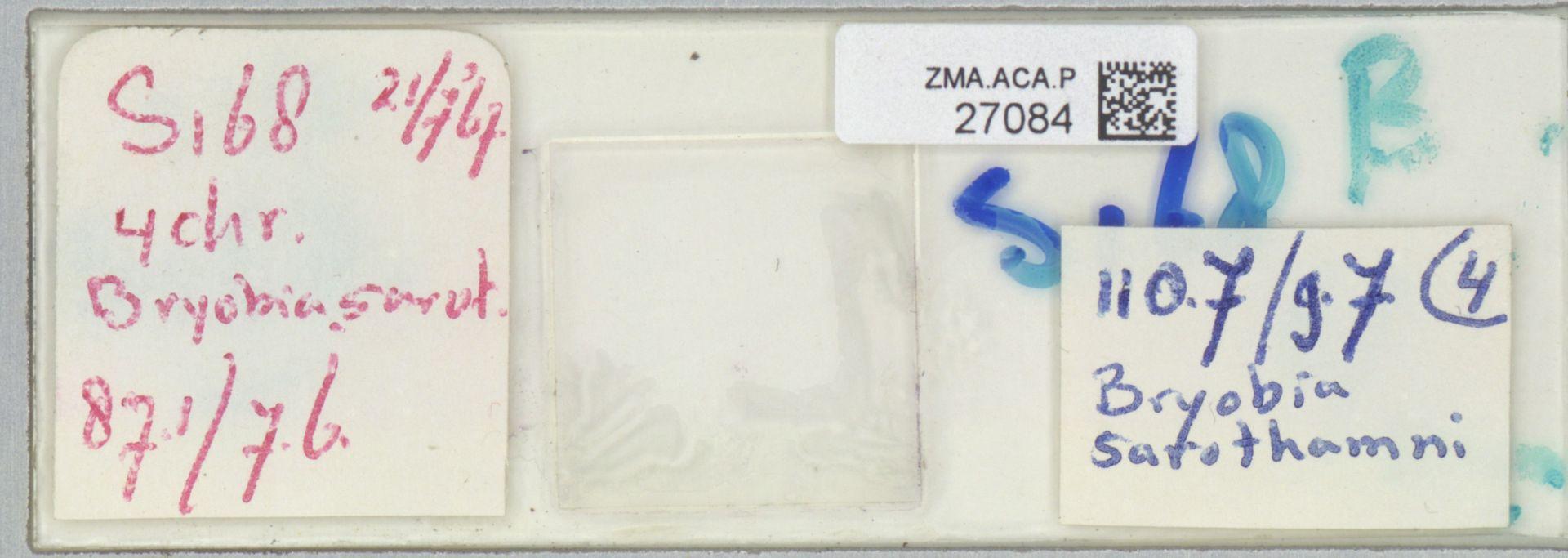 ZMA.ACA.P.27084 | Bryobia sarothamni