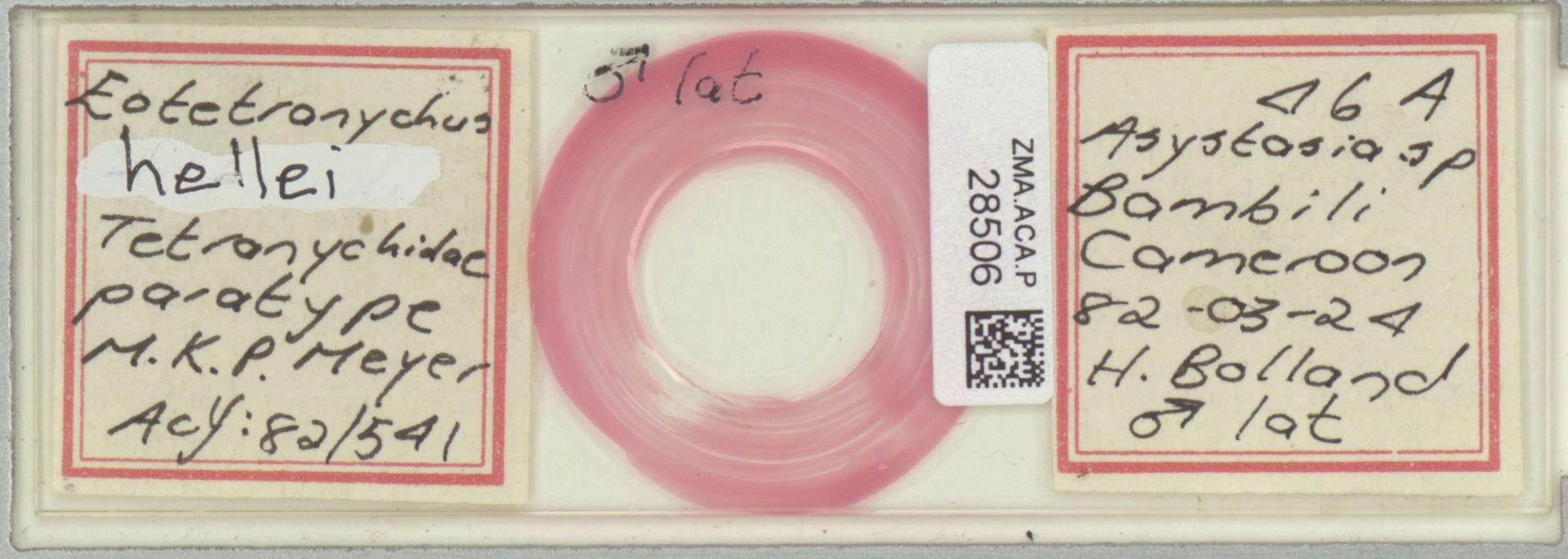 ZMA.ACA.P.28506 | Eotetranychus hellei