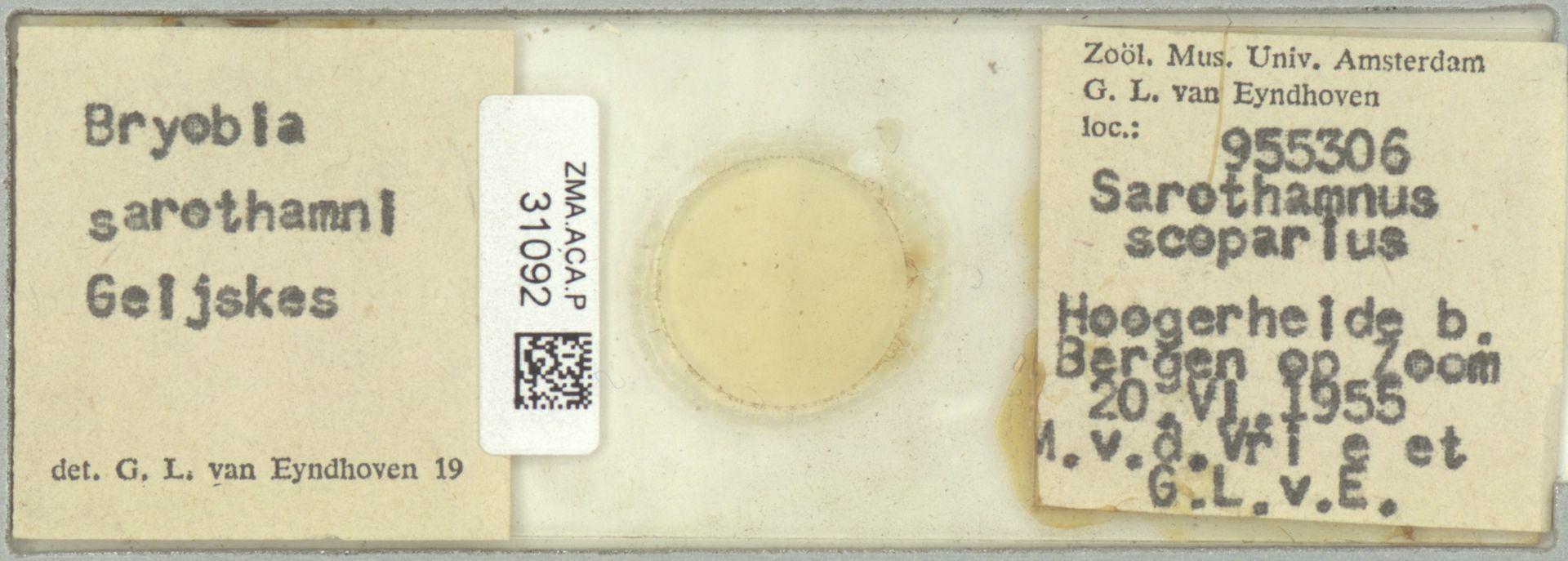 ZMA.ACA.P.31092 | Bryobia sarothamni Geijskes