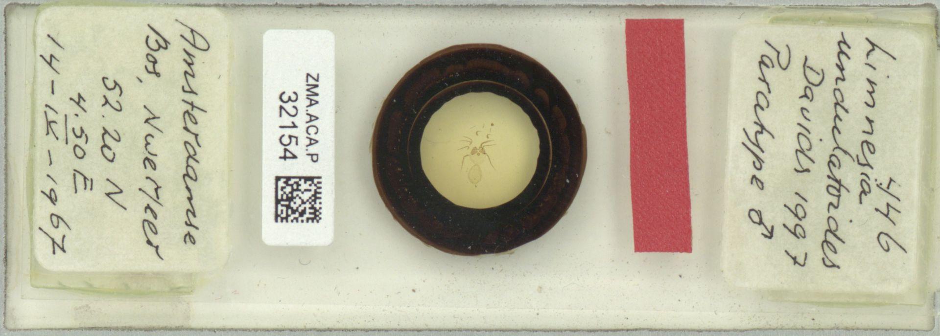 ZMA.ACA.P.32154 | Limnesia undulatoides Davids, 1997