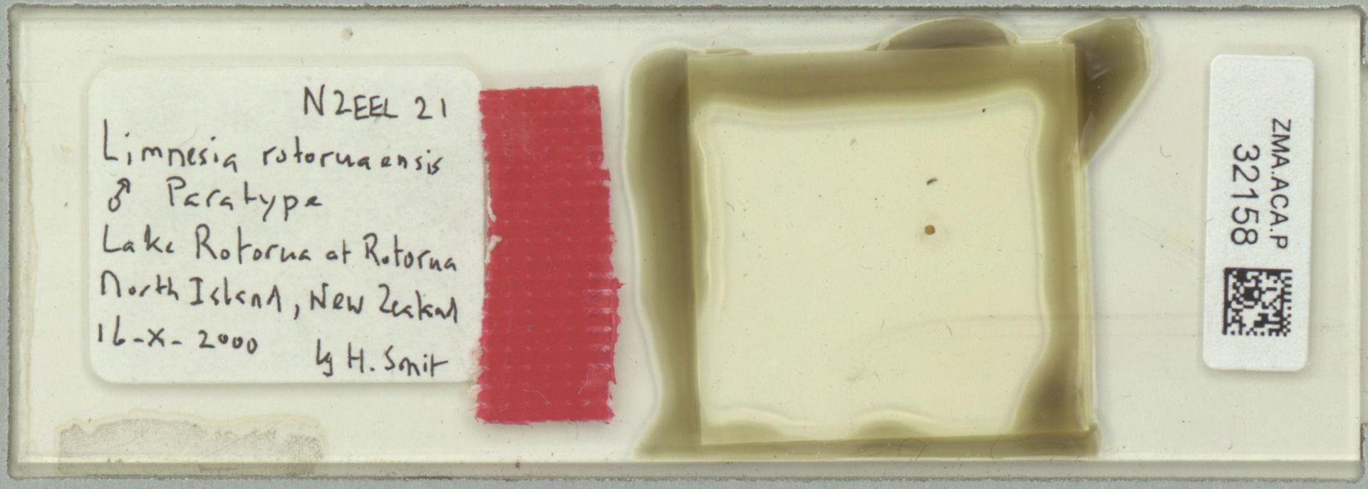 ZMA.ACA.P.32158 | Limnesia rotoruaensis Smit, 2002
