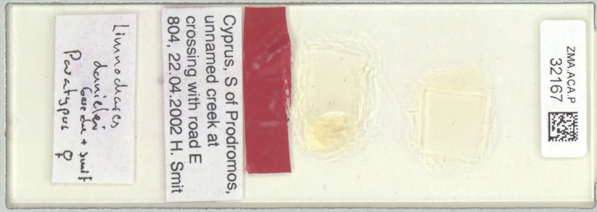 ZMA.ACA.P.32167   Limnochares danielei Gerecke & Smit, 2005
