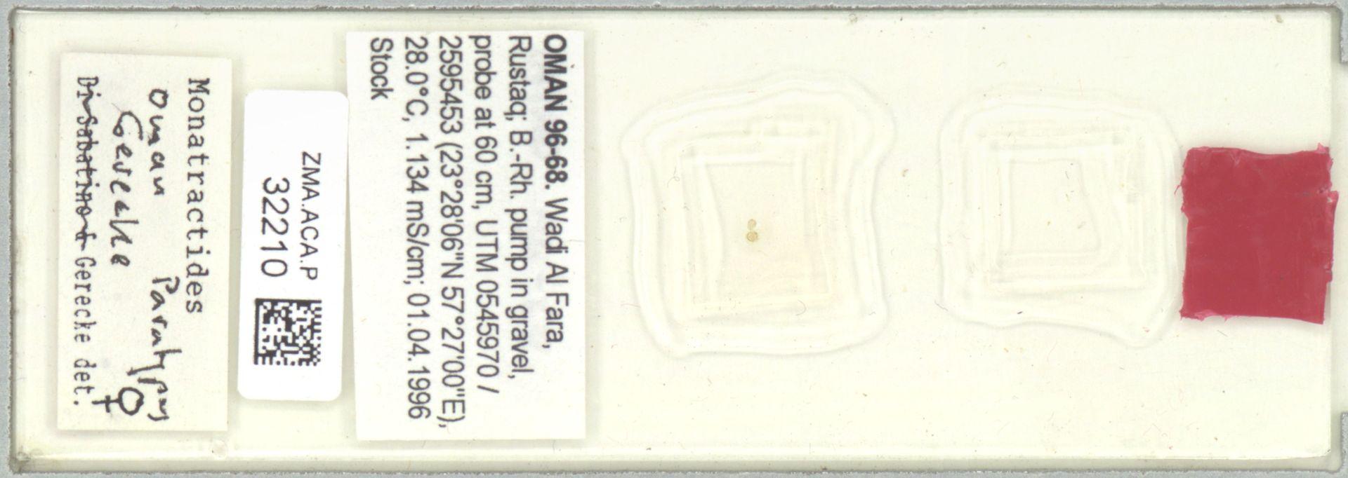 ZMA.ACA.P.32210 | Monotractides