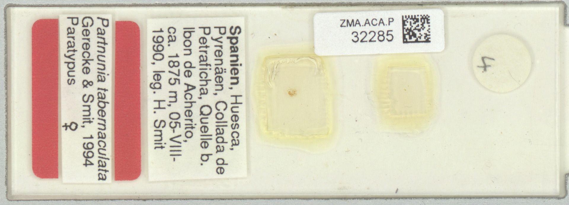 ZMA.ACA.P.32285 | Partnunia tabernaculata Gerecke & Smit, 1994