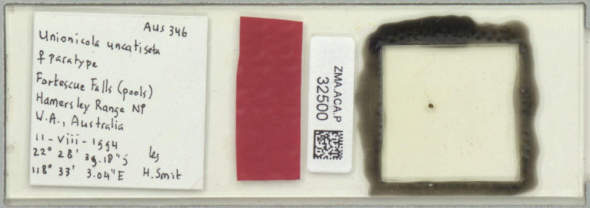 ZMA.ACA.P.32500 | Unionicola uncatiseta Smit, 2008