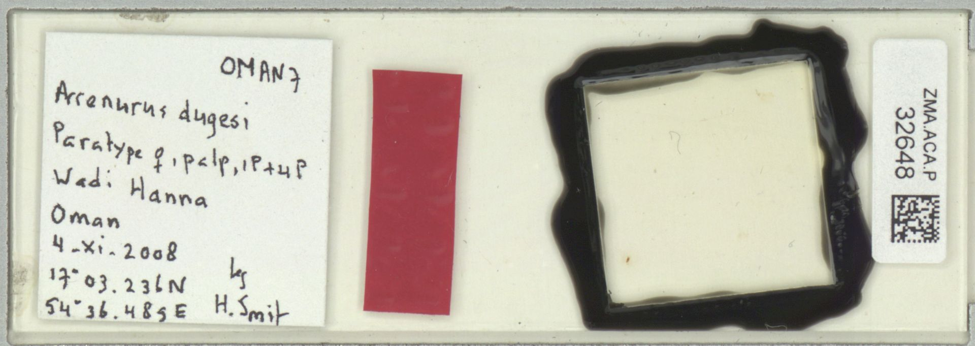 ZMA.ACA.P.32648 | Arrenurus dugesi Smit & Pesic, 2010