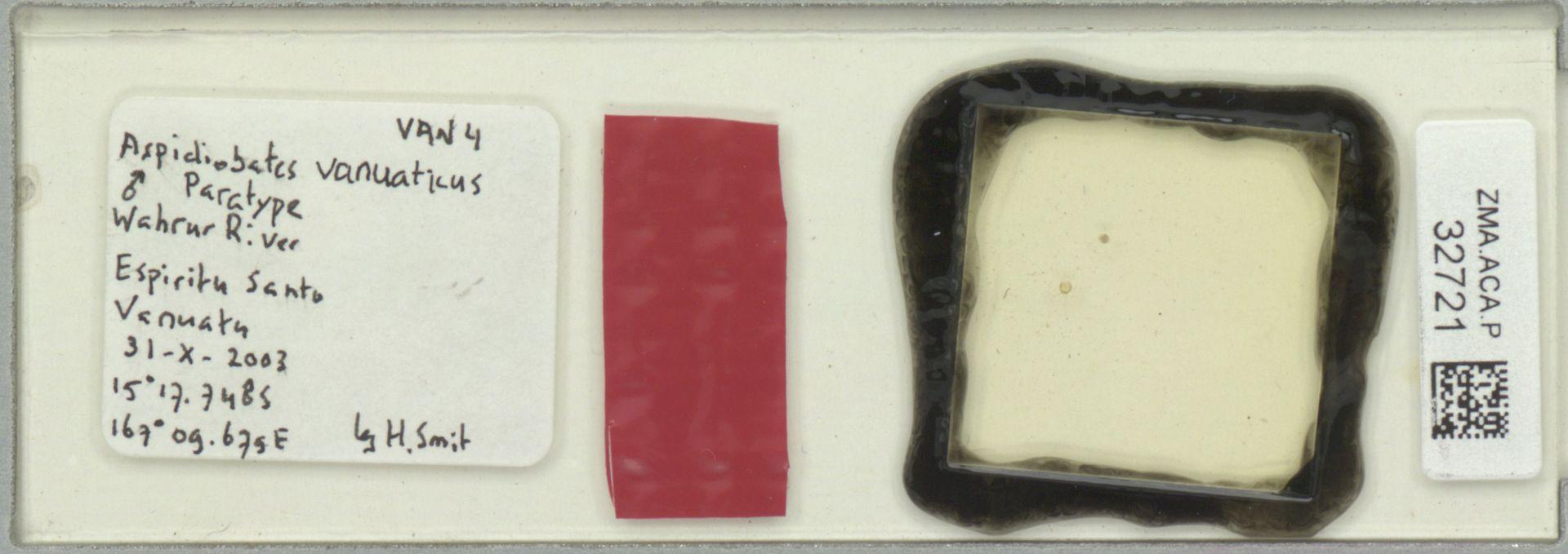 ZMA.ACA.P.32721 | Aspidiobates vanuaticus Smit, 2004